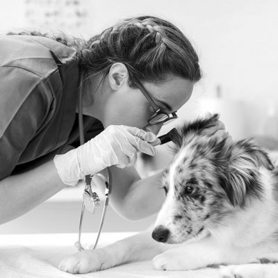 Technicienne examinant un chien